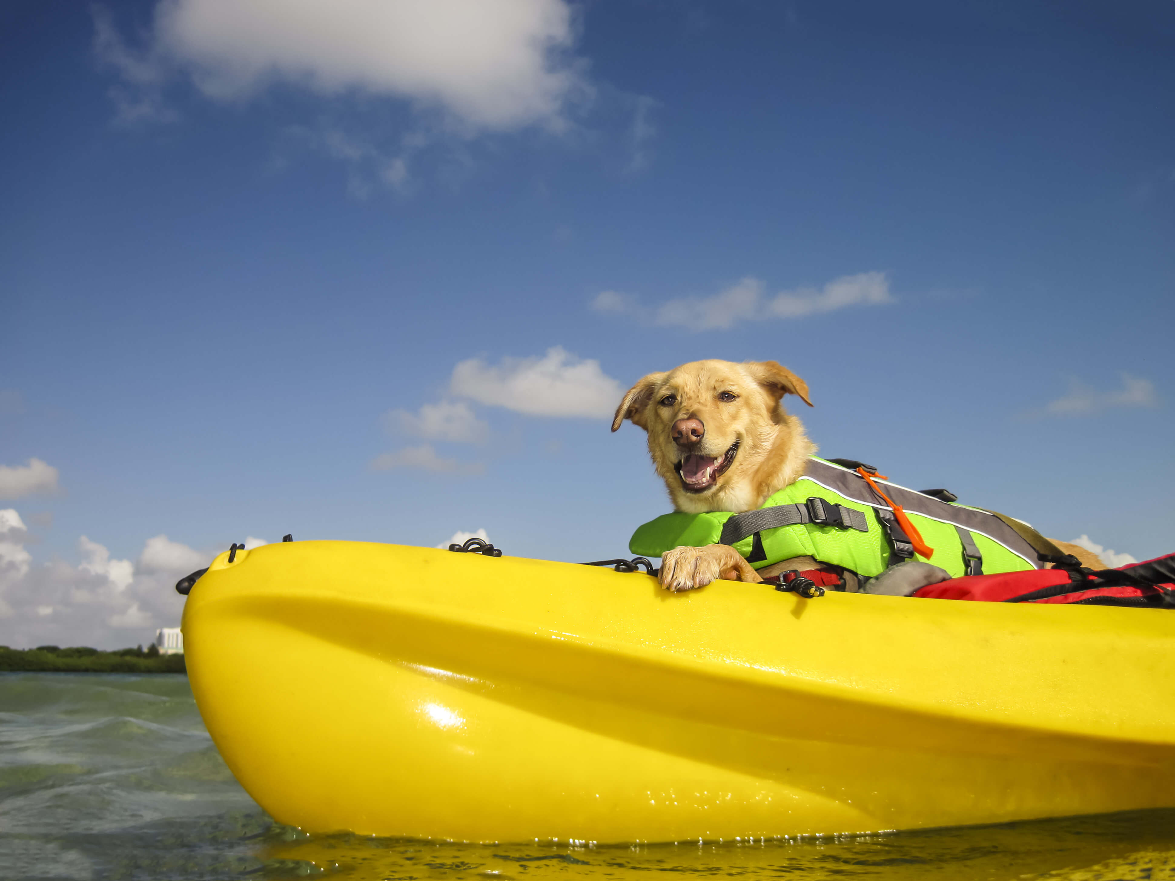 Best Sit On Top Kayaks For Dogs